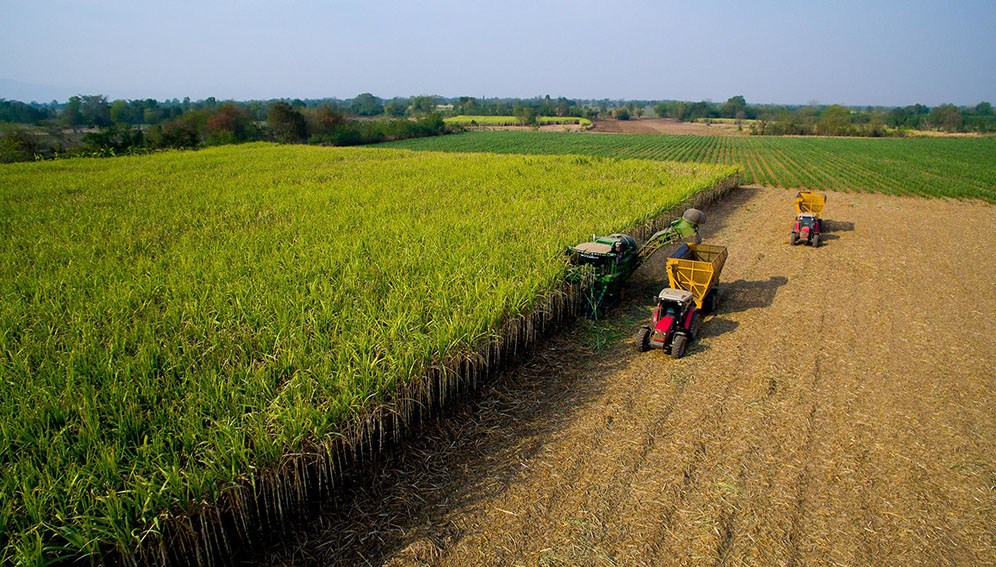 ROLE AND CHALLENGES OF AGRICULTURE IN 21ST CENTURY