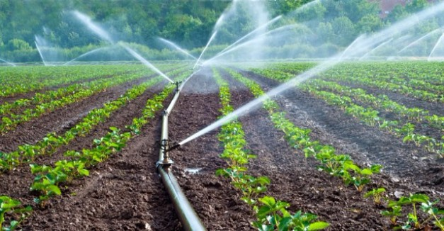 PROFITABLE SMALL SCALE FARMING IN INDIA AND ITS ADVANTAGES